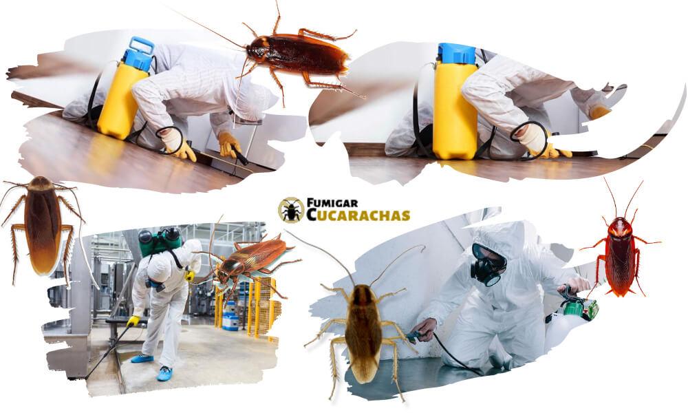 Fumigar cucarachas en Salamanca