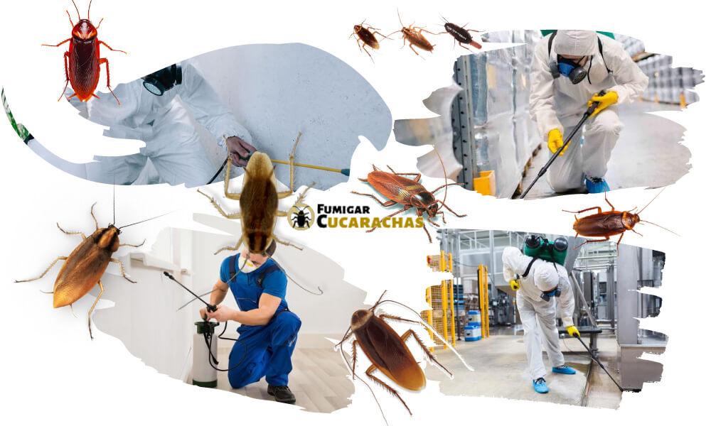Fumigar cucarachas en Vizcaya