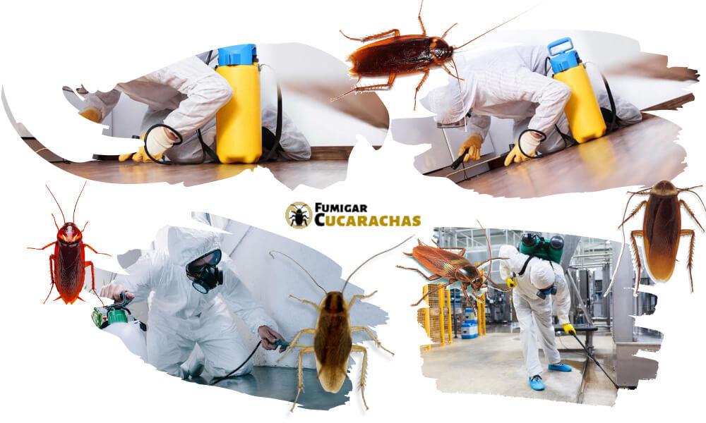 Fumigar cucarachas en Zaragoza