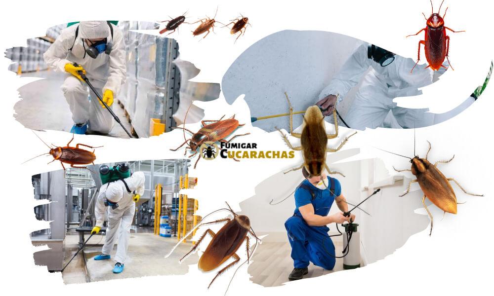 Fumigar cucarachas en Malaga