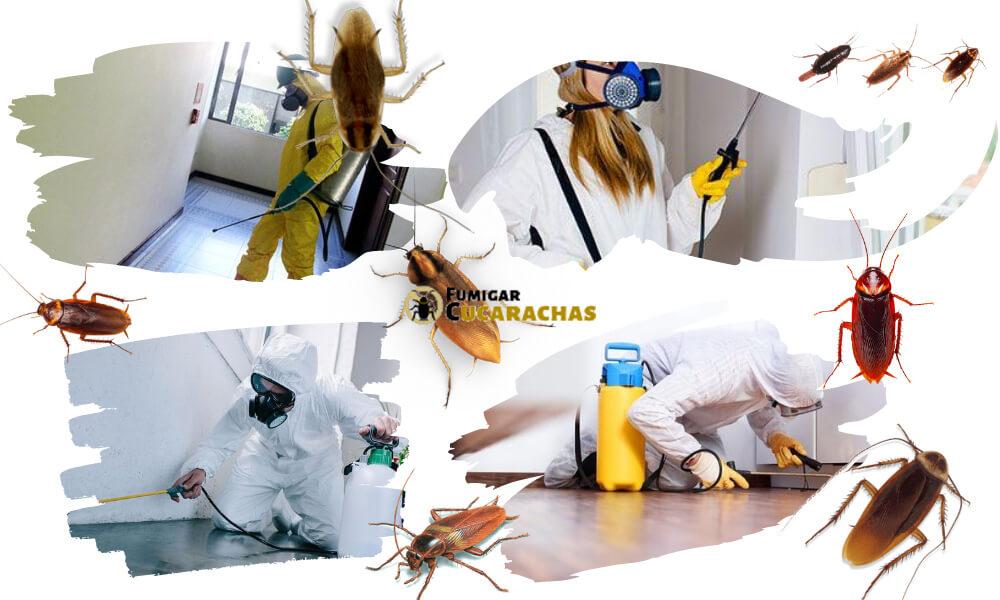 Fumigar cucarachas en Palencia