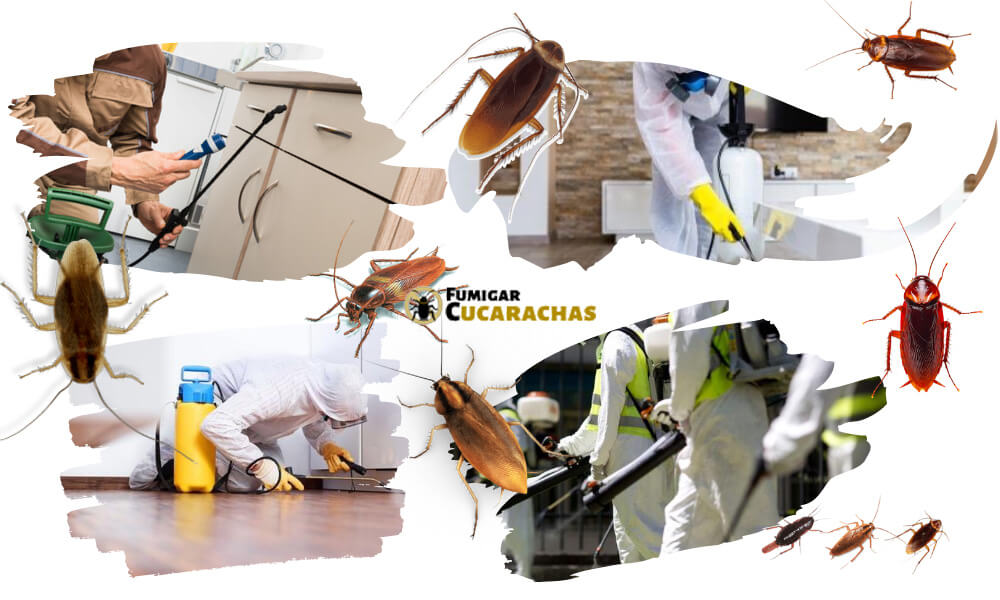 Fumigar cucarachas en Ciudad Real