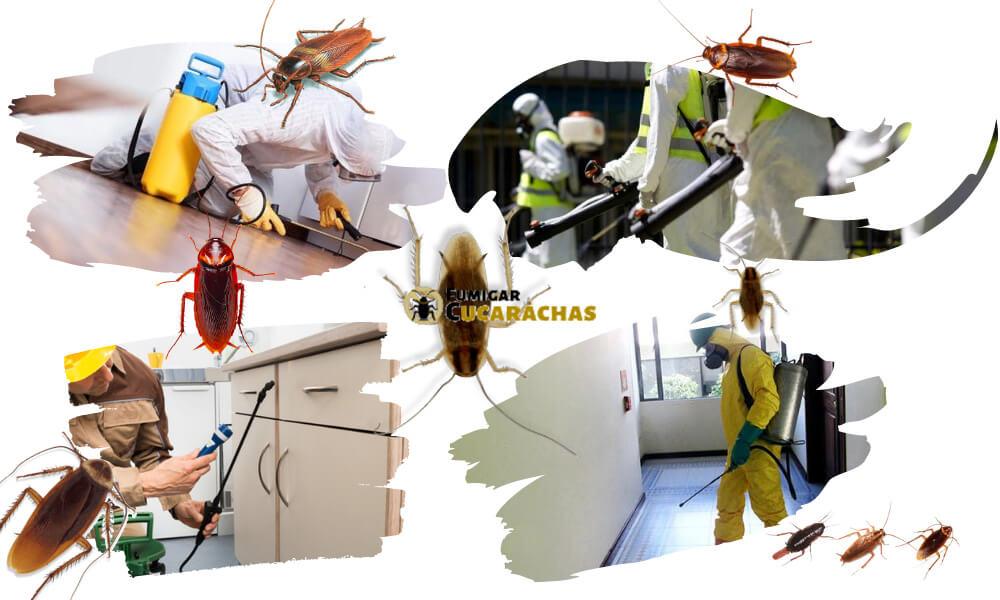 Fumigar cucarachas en Las Palmas