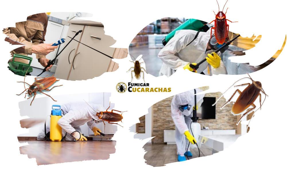 Fumigar cucarachas en Lleida