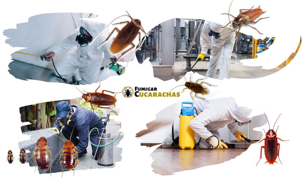 Fumigar cucarachas en Guipuzcoa