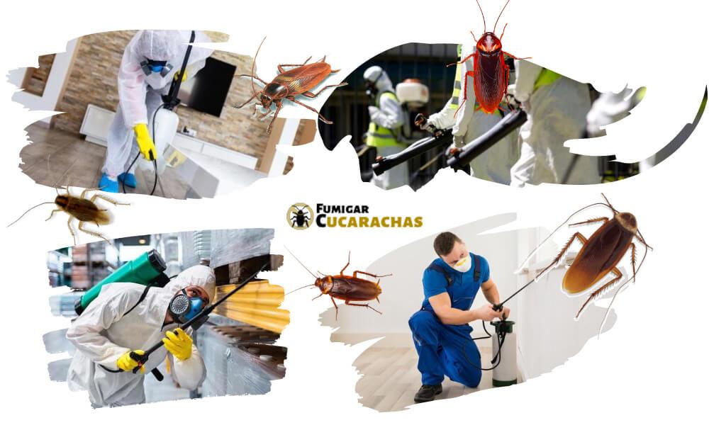 Fumigar cucarachas en Granada